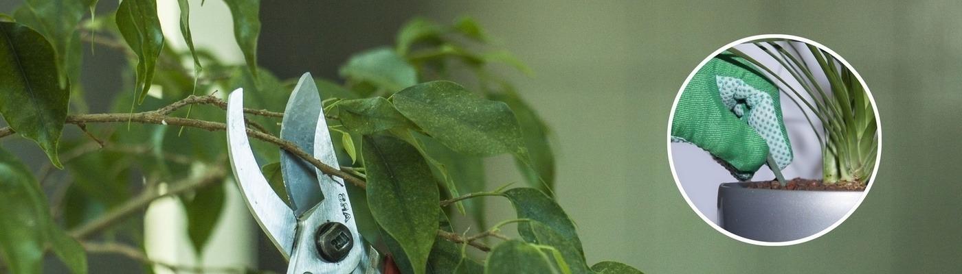 Beltéri növénydekoráció